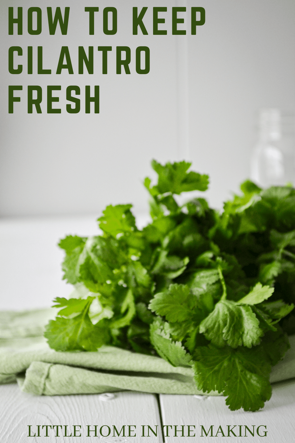 A bunch of cilantro on a white table. The text reads: How to Keep Cilantro Fresh