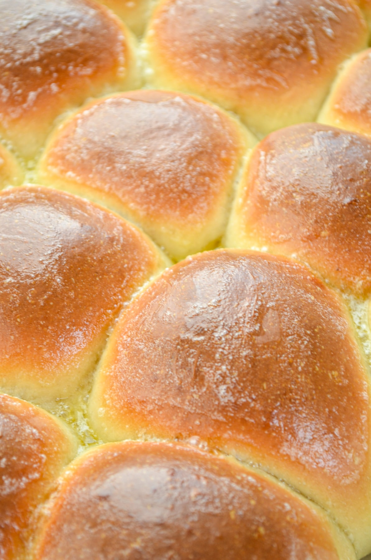 A close up of dinner rolls in a baking dish.